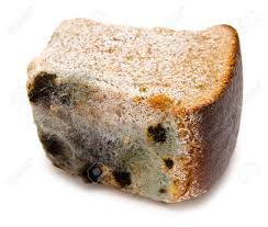 Contaminated Bread